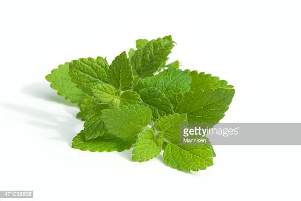 Bunch of lemon balm leaves on white background