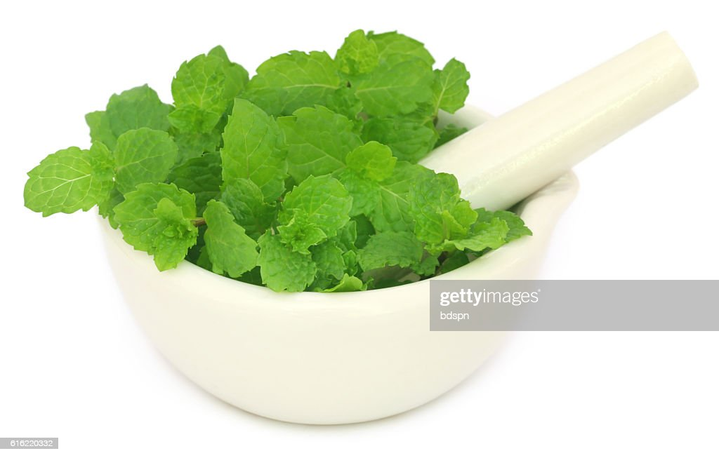 Bunch of mint leaves in a mortar : Stockfoto