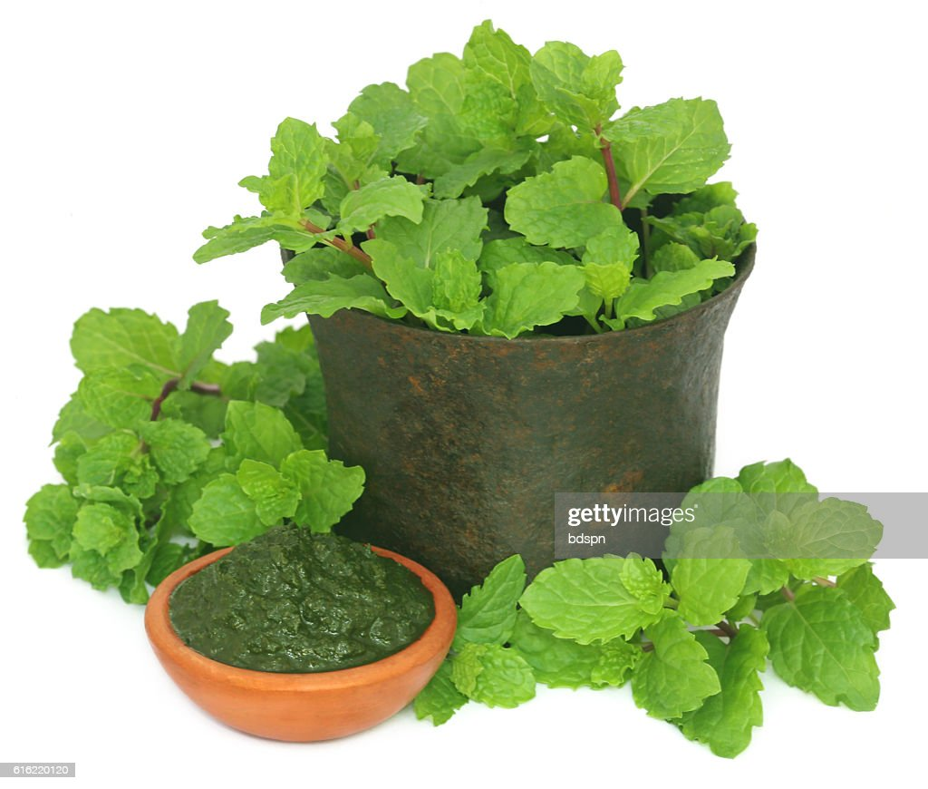 Bunch of mint leaves in a mortar with ground paste : Stock Photo