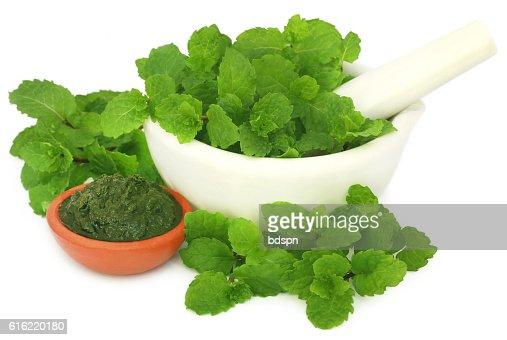 Bunch of mint leaves in a mortar with ground paste : Photo