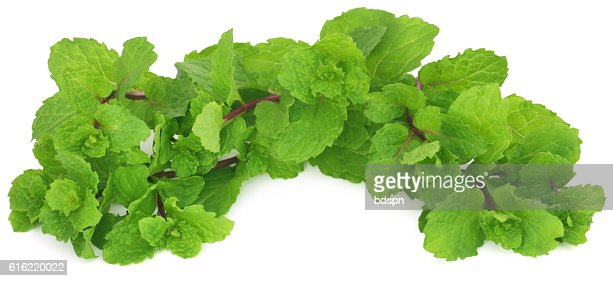 Bunch of mint leaves : Stock Photo