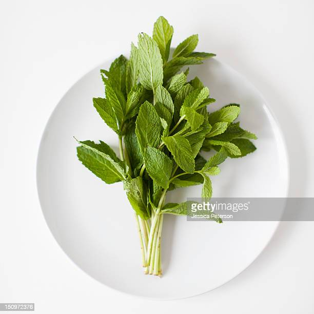 Bunch of mint on plate, studio shot