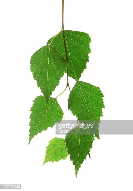 Bunch of organic leaves on a white background