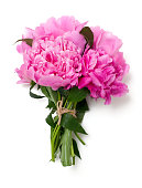 bunch of pink peonies isolated on white background