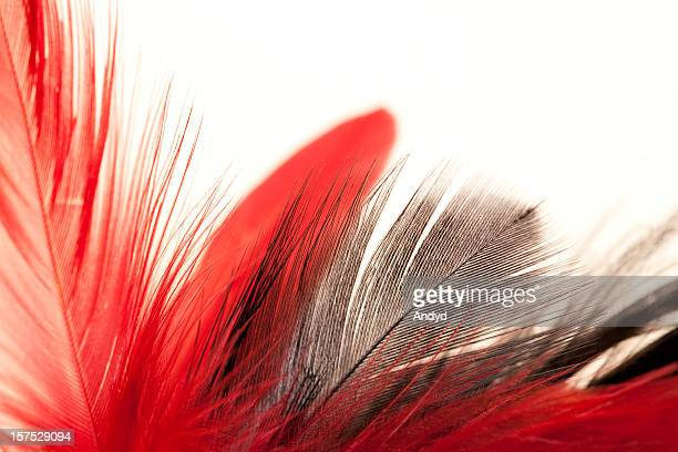 A bunch of red and grey feathers