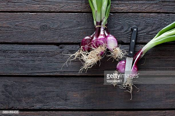 Bunch of red spring onions and kitchen knife on dark wood