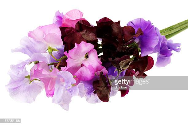 Bunch Of Sweet Pea Flowers