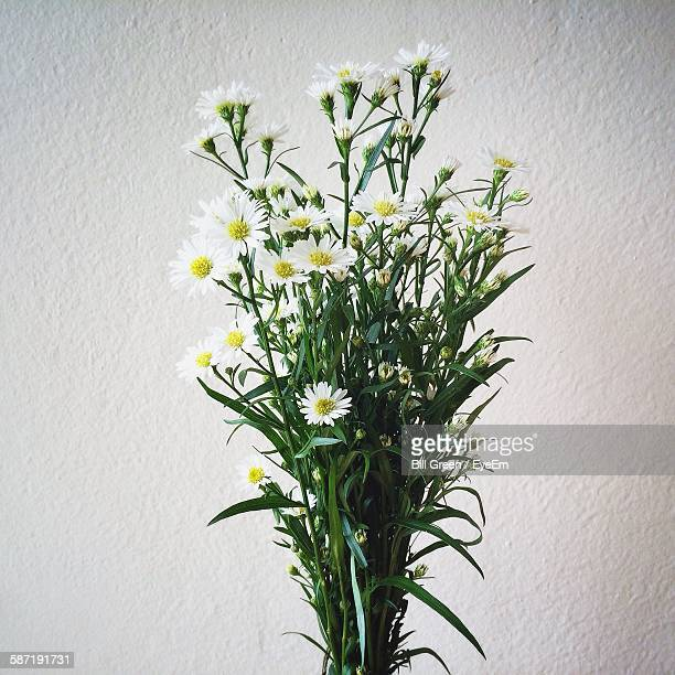 Bunch Of White Flowers Against Wall