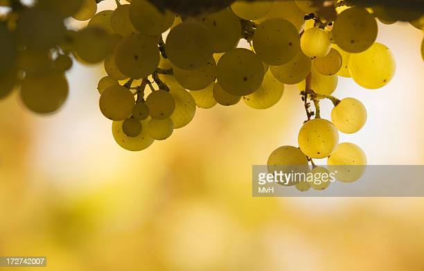 Bunch of white grapes against a yellow and white background