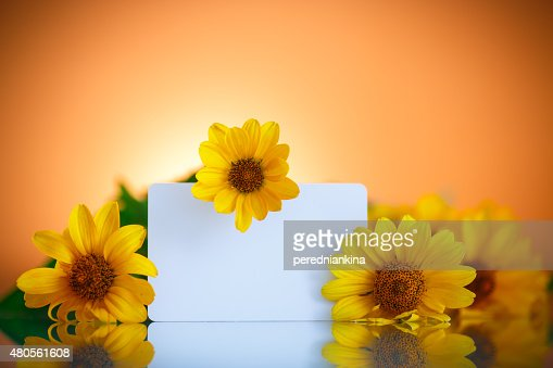 bunch of yellow daisy flowers : Stock Photo