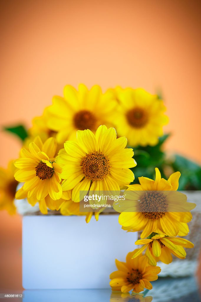 bunch of yellow daisy flowers : Stock Photo