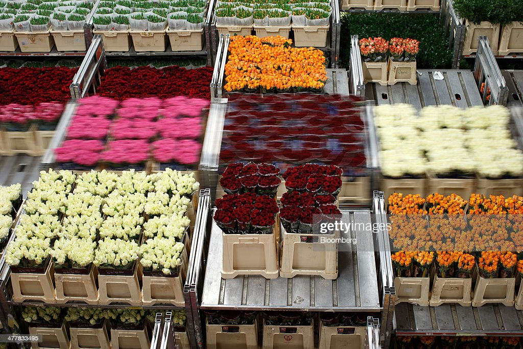 Bunches of flowers sit stacked on shelving before distribution at FloraHolland, the largest flower auction in the world, in Aalsmeer, Netherlands, on Tuesday, March 11, 2014. The Netherlands' flower and plant exports, the world's biggest, fell 2.3 percent last year as declining consumer purchasing power was compounded by cold spring weather in Europe and a summer heat wave that hurt sales. Photographer: Jasper Juinen/Bloomberg via Getty Images