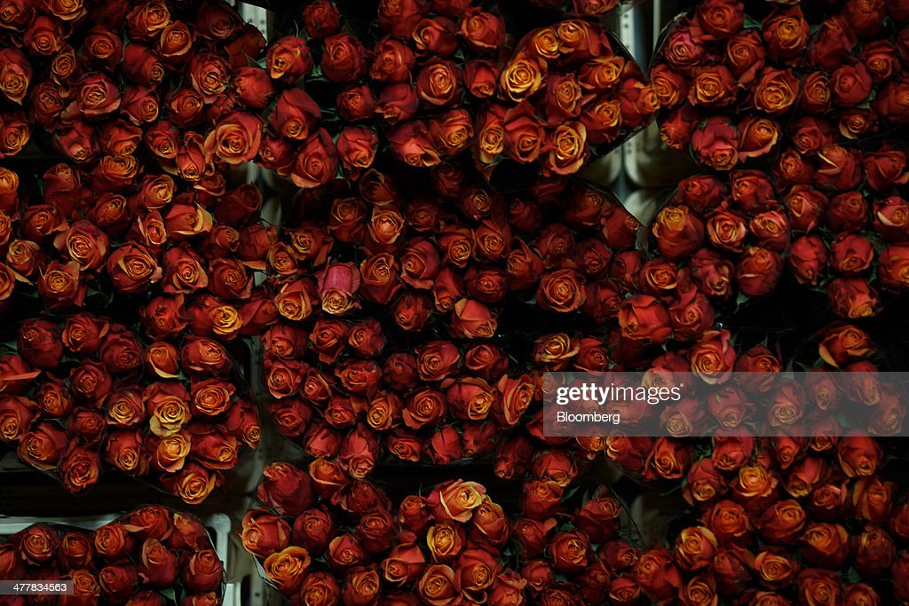 Bunches of roses sit before distribution at FloraHolland, the largest flower trade center in the world, in Aalsmeer, Netherlands, on Tuesday, March 11, 2014. The Netherlands' flower and plant exports, the world's biggest, fell 2.3 percent last year as declining consumer purchasing power was compounded by cold spring weather in Europe and a summer heat wave that hurt sales. Photographer: Jasper Juinen/Bloomberg via Getty Images