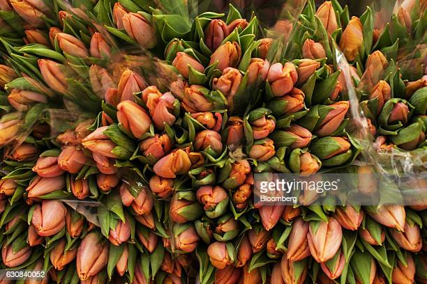 Bunches of tulips sit on display on a florist's stall at Albert Cuyp street market in Amsterdam Netherlands on Tuesday Jan 3 2017 The Netherlands...