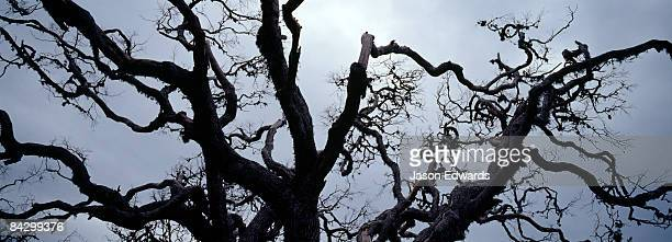 The bows of a dead tree twist and turn into a storm-laden sky.