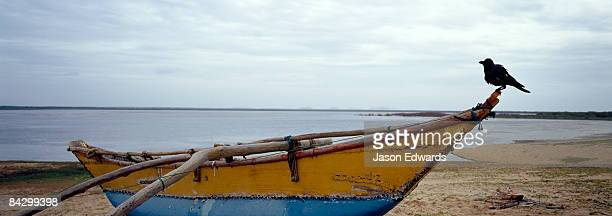 A raven rests on the bow of a small fishing boat on a remote coast.