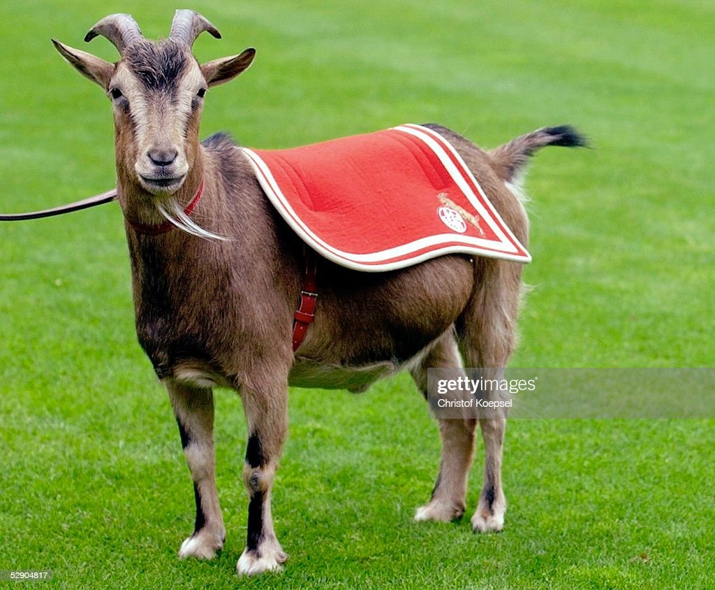Hennes The Goat, Official FC Cologne Mascot | Getty Images