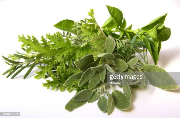 Bundle of mixed herbs on white background