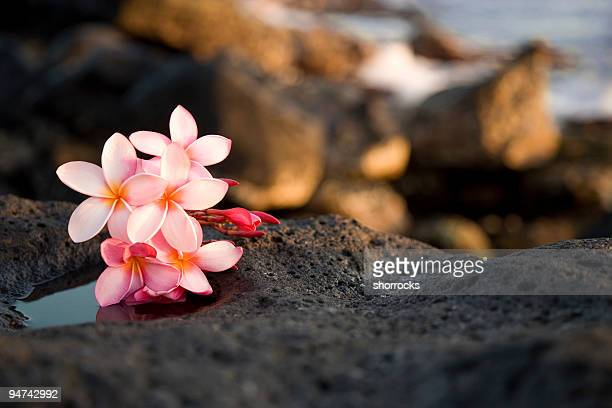 A bundle of pink flowers sitting on rocks