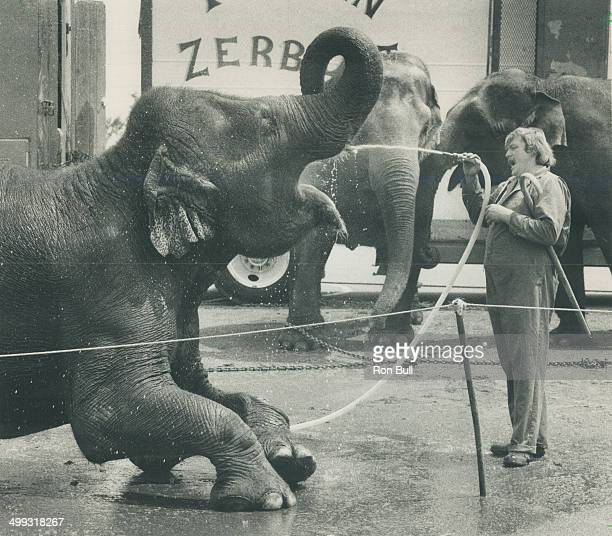 Bunny an Indian elephant with the Tarzan Zerbini Shrine Circus stoops so Jerry Parshall's wash hose can wet his considerable whistle The circus is...