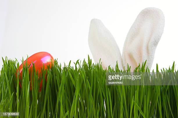 Bunny Ears Search for Easter Egg in Grass, on White