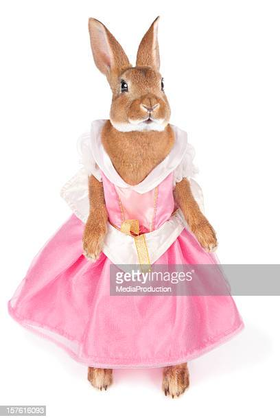 Bunny in a dress