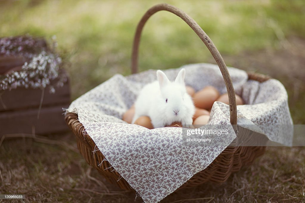 Bunny in easter basket : Stock Photo
