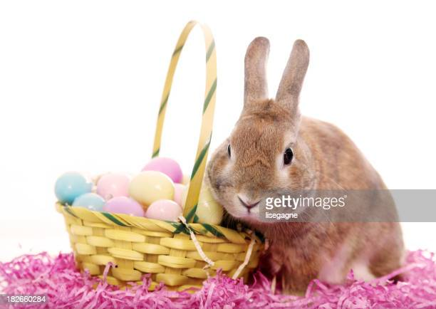 Bunny with an Easter basket