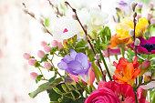 Verschiedene bunte Blumen im Fruehling