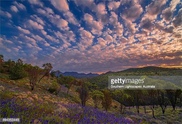 Bunyeroo clouds
