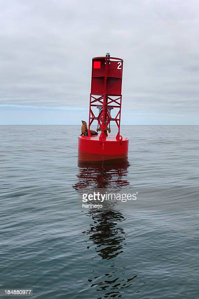 Buoy and Sea Lion