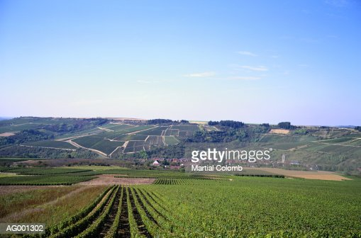 Burgundy Landscape : Stock Photo