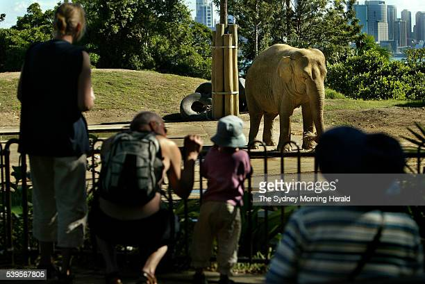 Burma an asian elephant in her late 40 s enjoys one of her six meals of the day in her enclosure at Taronga Zoo in Sydney on 24 March 2005 Animal...