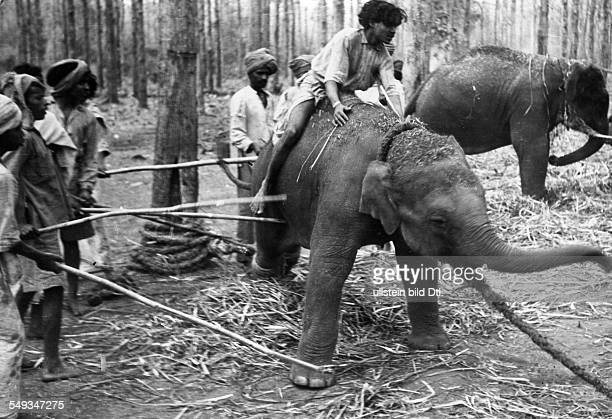 Burma Local people taming elephants in a forest 1942 Photographer Wolfgang Weber Published by 'Berliner Illustrirte Zeitung' 14/1942 Vintage property...