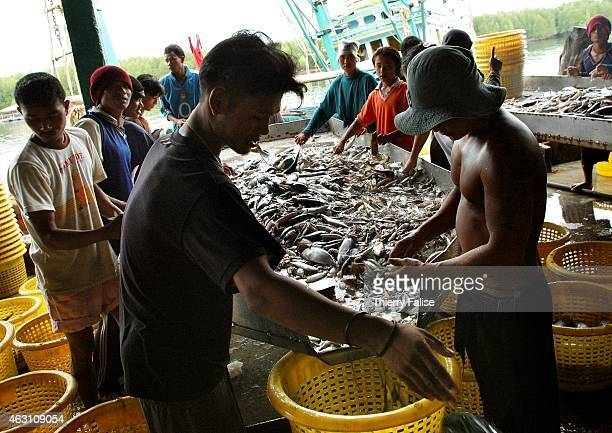 Burmese migrants sort out fish at the Kuraburi pier