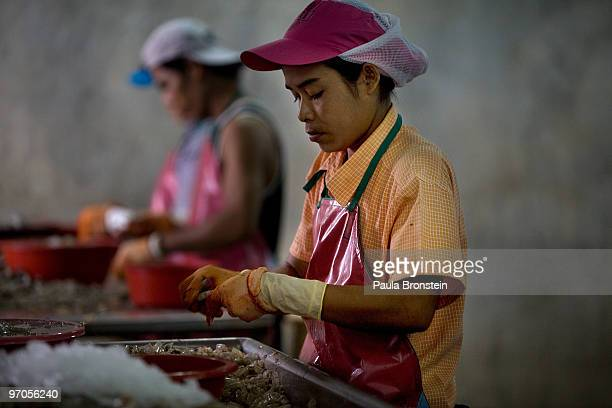Burmese migrants workers peel shrimp at a shrimp factory February 25 2010 in Mahachai Thailand Migrant workers mostly Burmese are running into more...