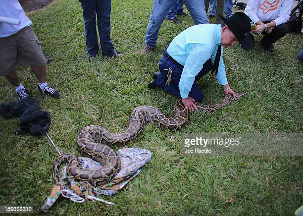 Burmese python is held by Ron Bergeron as he speaks to the media at the registration event and press conference for the start of the 2013 Python...