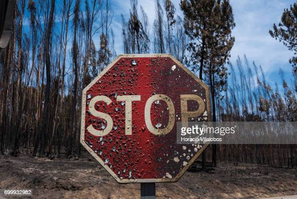 Burned Stop sign and trees across the street from the small village cemetery where forest fire victims are being buried on June 22 2017 in Vila...