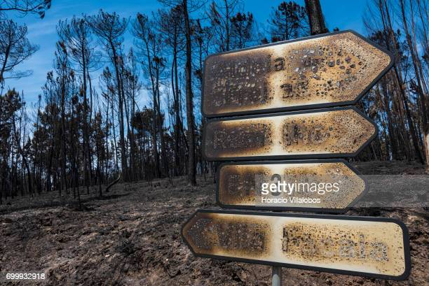 Burned traffic signs and trees across the street from the small village cemetery where forest fire victims are being buried on June 22 2017 in Vila...