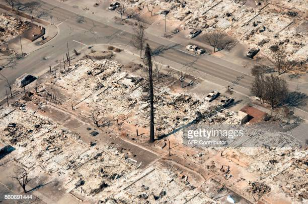 A burned tree stands in the middle of burned properties in Santa Rosa California on October 12 2017 Hundreds of people are still missing in massive...