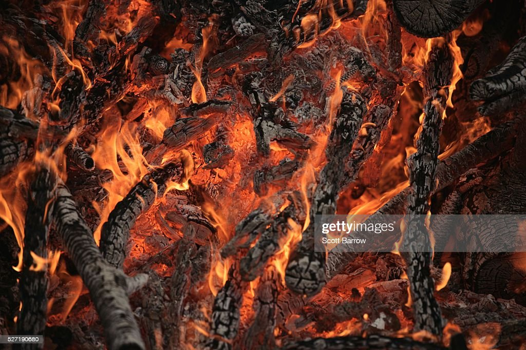 Burning branches : Foto de stock