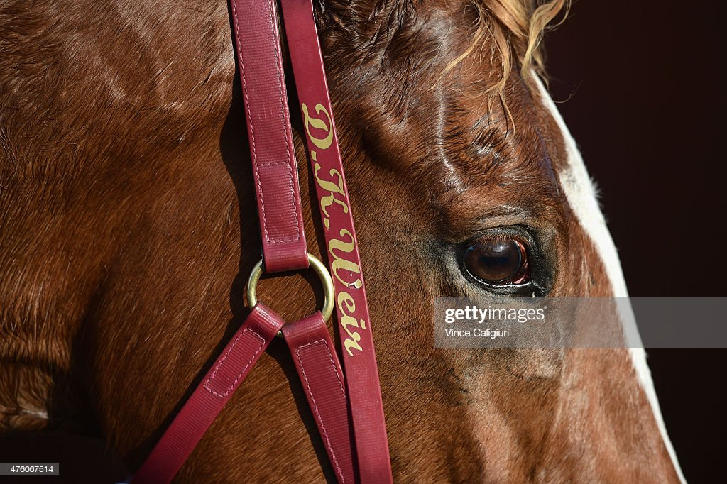 Burning Front from the Darren Weir stable waits to be washed down after Race 6 during Melbourne Racing at Moonee Valley Racecourse on June 6, 2015 in Melbourne, Australia.