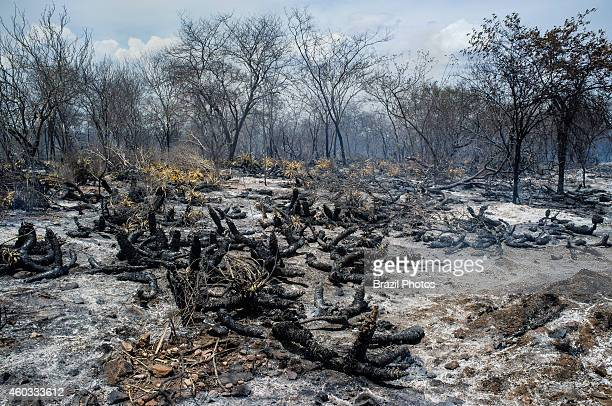 FLORESTA PERNAMBUCO BRAZIL Burning of Caating biome a semiarid scrub forest situated in the northeast of Brazil extremely rich in natural resources...