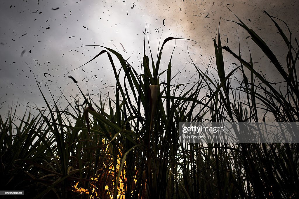 A burning sugar cane field causing air pollution seen near Florida Valle del Cauca Colombia 29 May 2012 The Cauca River valley is the booming centre...