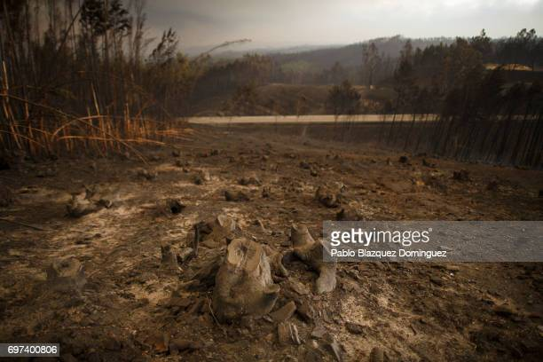 A burnt landscape is seen after a wildfire took dozens of lives on June 18 2017 near Castanheira de Pera in Leiria district Portugal On Saturday...