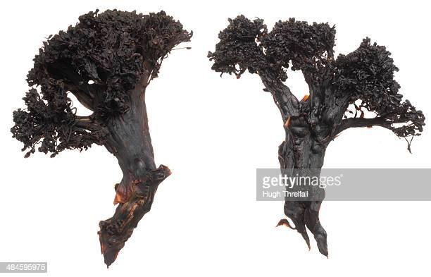 Burnt vegetables