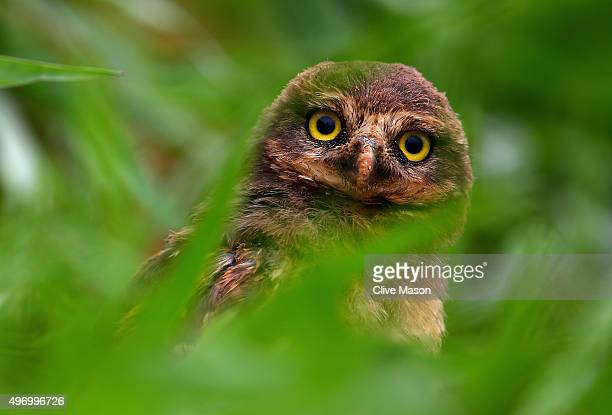A burrowing owl at the side of the track during practice for the Formula One Grand Prix of Brazil at Autodromo Jose Carlos Pace on November 13 2015...