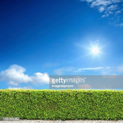 bush fence and sunny sky