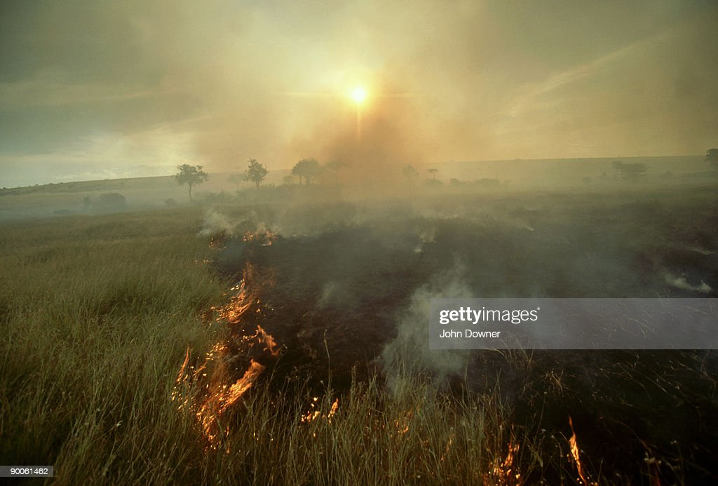 Bush Fire, Masai Mara, Kenya : Stock Photo