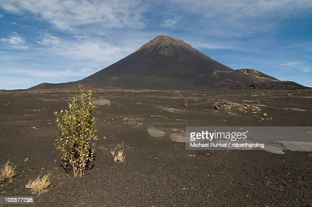 Bush in front of volcano on Fogo, Cape Verde Islands, Africa